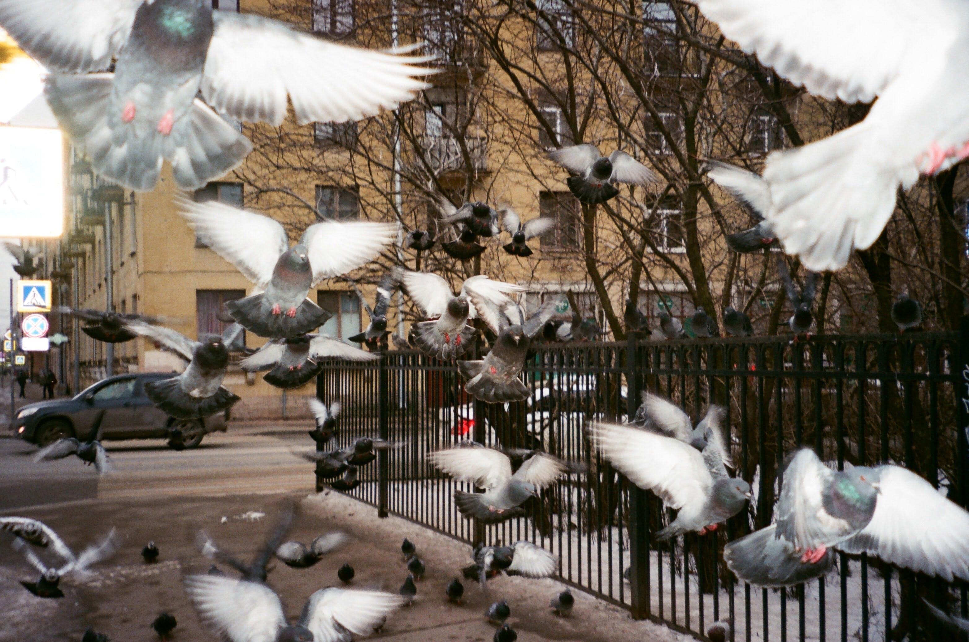 Lackschaden Vogelkot